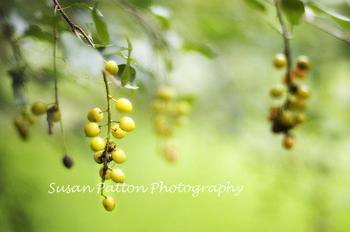 wyellow_berries