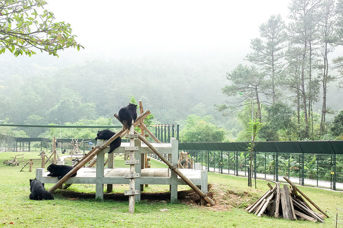 Happy rescued bears living in Animals Asia's sanctuary, 2015