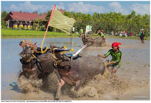 travel bali 峇里島 hsueh888tw leicam240 20150726
