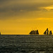 Sailing Silhouettes by Thomas Dwyer