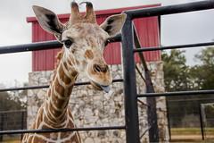 TX Wildlife Ranch Safari
