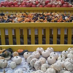 gourds w