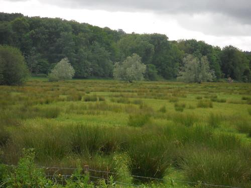 Nadder Meadows