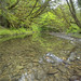Creek in Headwaters Forest Reserve by blmcalifornia