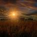 Sunset on the Farm by Reg Ramai