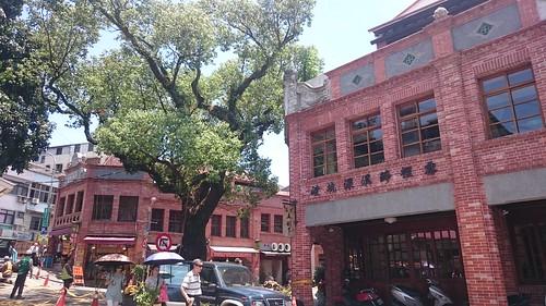 深坑百年老樟樹,是居民成長的回憶。彭瑞祥攝。