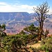 vegetation along the rim, Grand Canyon by tonnyc