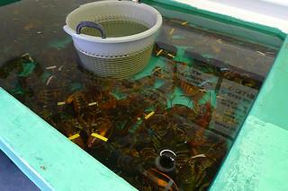 Maine - Kittery Chauncey Creek Lobster Pier tank