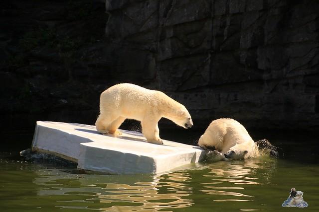 Tierpark Berlin 02.08.2015 0297
