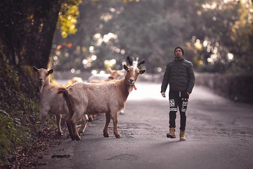 Mallo Il pastore delle capre