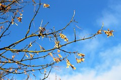 seed pods and blue sky