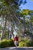Wild Pacific Trees by Laríssa