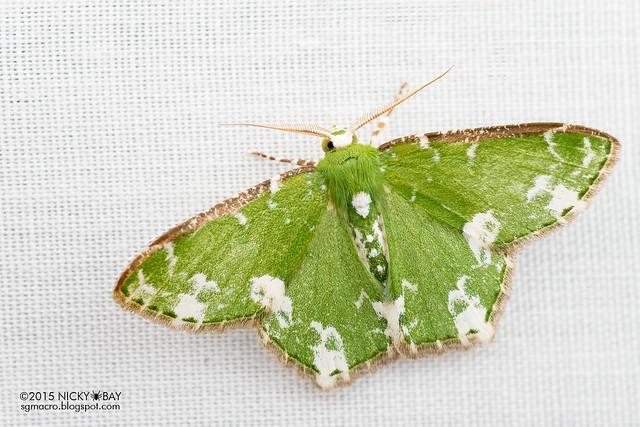 Moth - DSC_4058