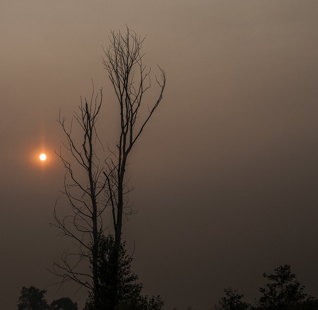vancouver island smoke