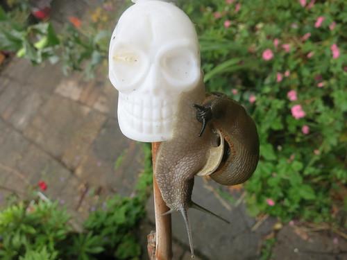 scene of garden horror