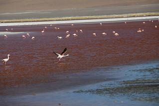 Laguna Colorada.  Uyuni Salt Flats.  Bolivia.