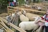Bannow Rathangan Agricultural Show 2015