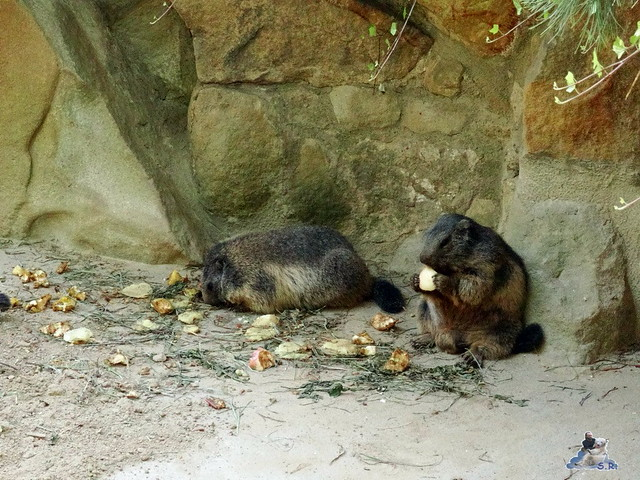 Zoo Berlin 05.08.2015 094