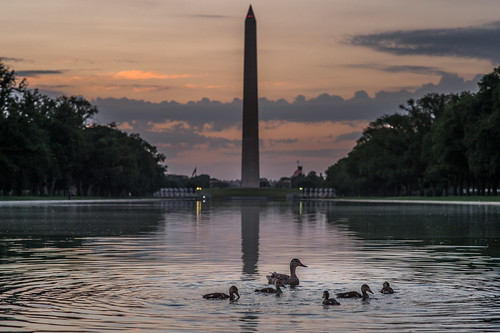 An Early Morning Swim in DC by Geoff Livingston