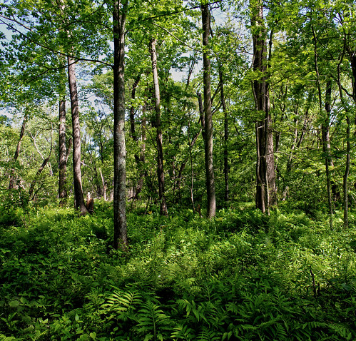 Wood Elevation Usa : Elevation of wood county wi usa maplogs