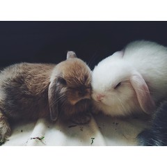 So precious. Baby #bunnies. #rabbits #bunlife #bunsofig :rabbit::rabbit2::heart_eyes: