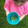 Harvest! #FergGarden15 #fergletoutside