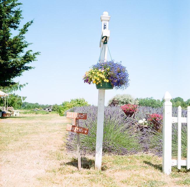 jardin du soleil-8