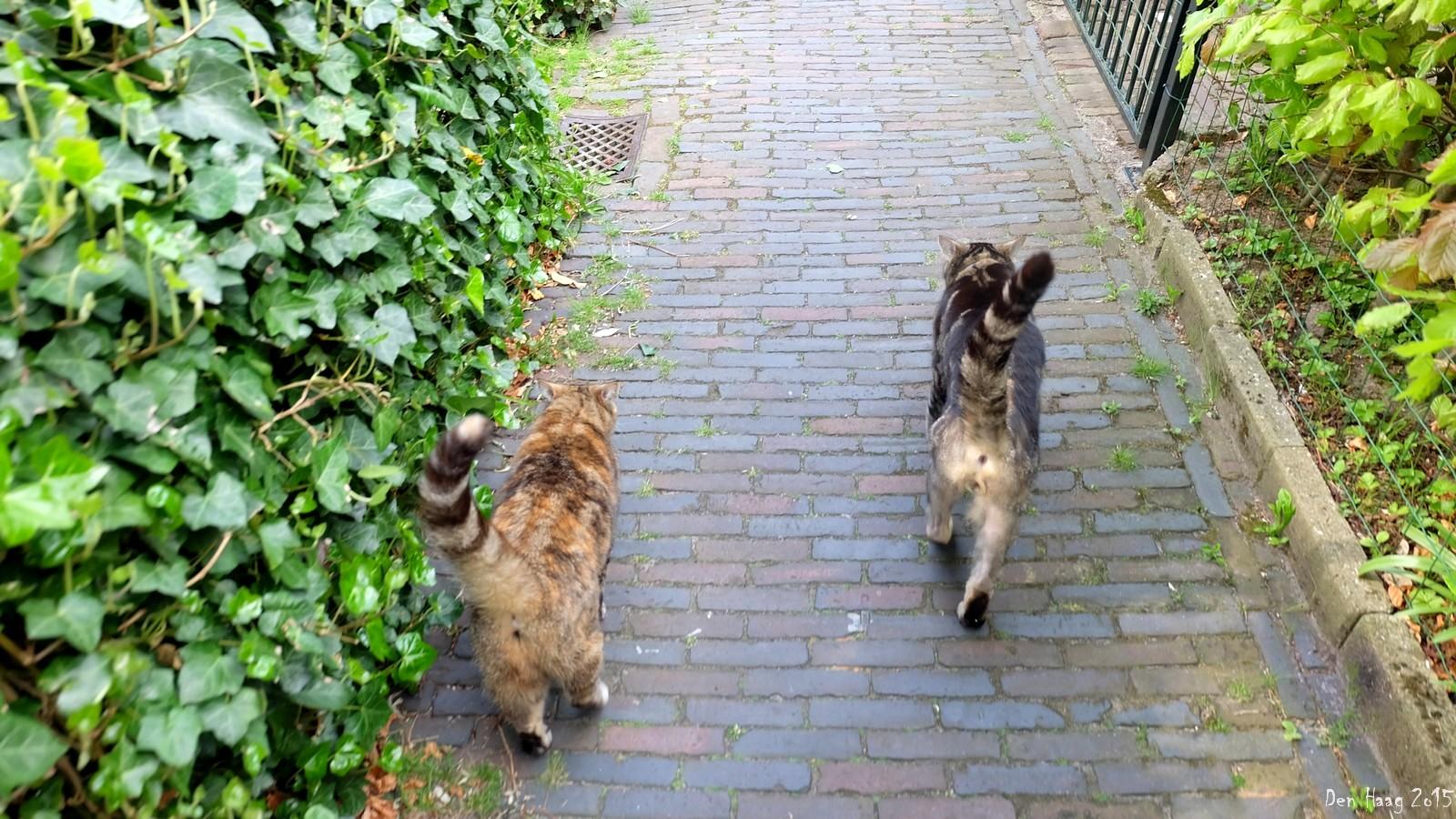 Cat+cat, Den Haag, Nederland