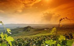 Langhe e Monferrato sono il nuovo patrimonio dell'umanita