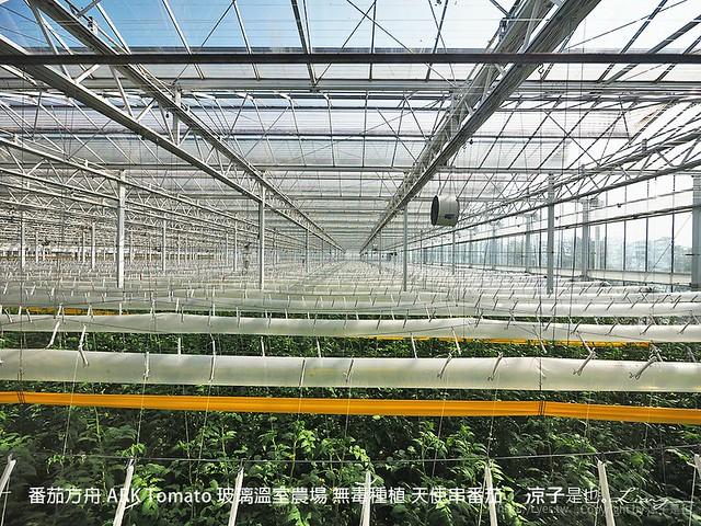 番茄方舟 ARK Tomato 玻璃溫室農場 無毒種植 天使串番茄 17