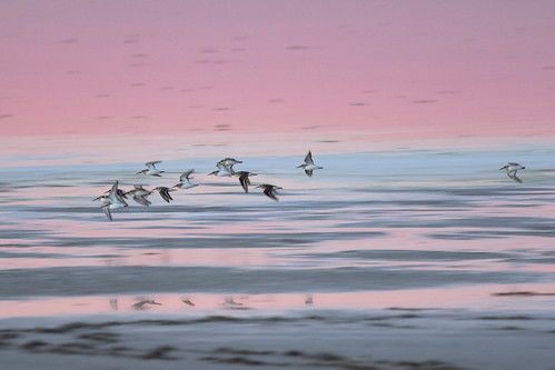 sunset waders