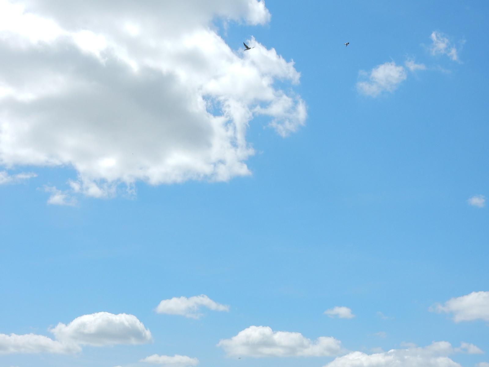 Blue sky, red kite Didcot Circular