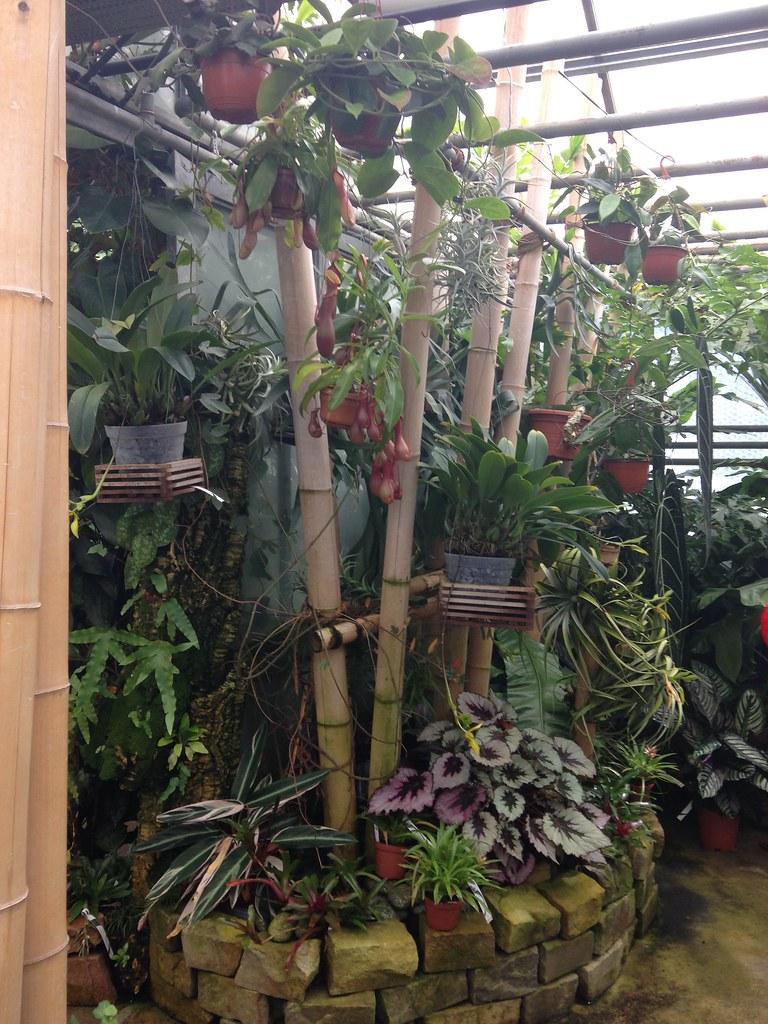 Orchidarium de Prangins 19300691812_a9e2aac7d7_b