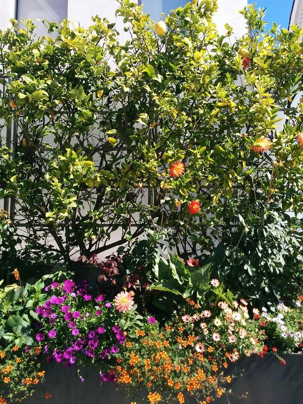 morning walk: flores y cafecito <3