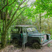 Jeep in the jungle by Orchids love rainwater