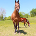 Missouri Horse
