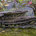 Frogs in a log.How many frogs can you find? by Mel Diotte