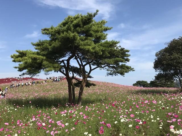 201610 国営ひたち海浜公園
