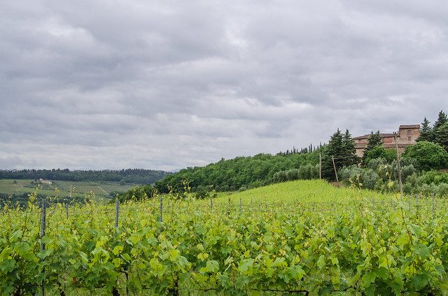 20150522-Tuscan-Wine-Country-0303