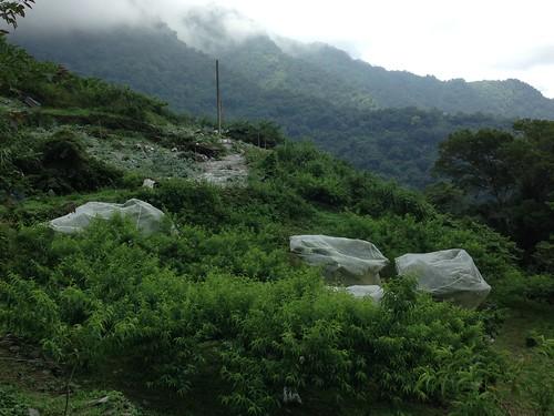 洛韶果農使用的防猴網。攝影:廖靜蕙。