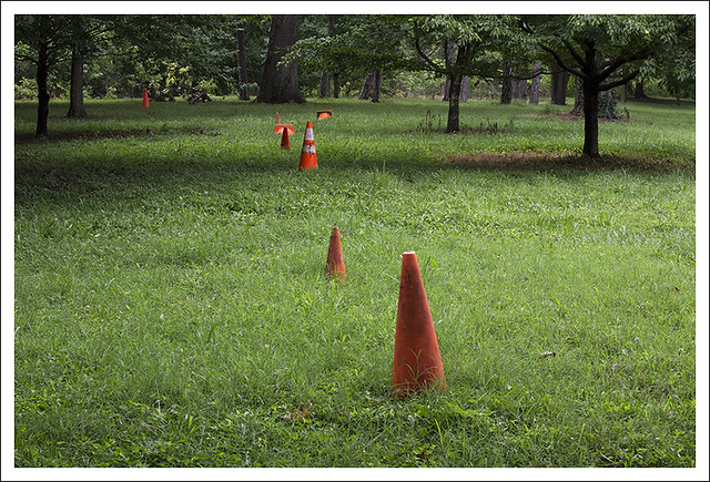 Traffic Cones In The Woods