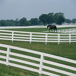 James Milmoe; Calumet Farm, Kentucky; Photograph - Stop/Look/See: Photography by James Milmoe