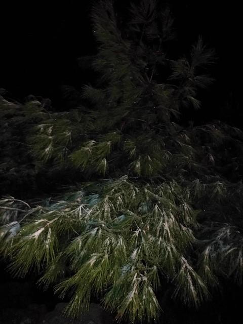 Φωτογραφίες από τον χιονισμένο Κουτρούβαλο απόψε το βράδυ στην Ψίνθο !