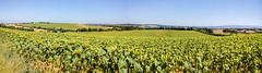 arable - Photo of Peyrefitte-sur-l'Hers