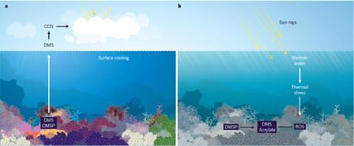 珊瑚礁與DMSP的關係圖。圖片來源:Graham Jones (2013).