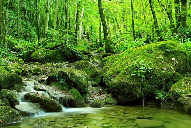 rio Patok