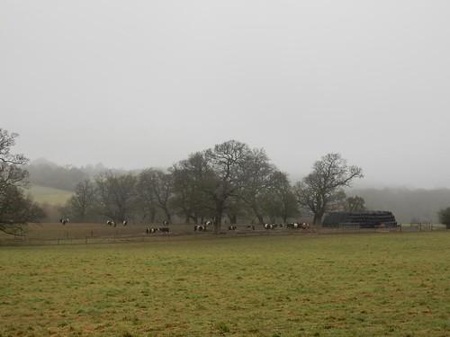 Constable-ish cows