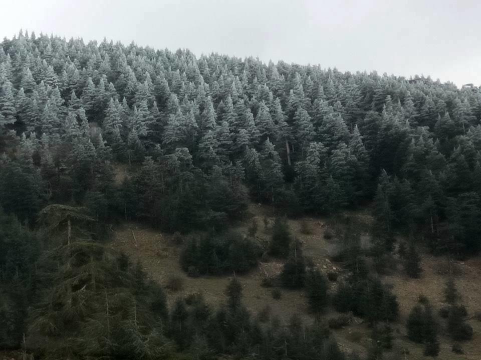 صور نادرة للطبيعة الجزائرية - صفحة 14 31883030312_27d53a7604_b