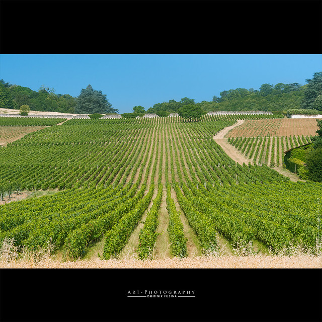 Green Lines in Beaujolais