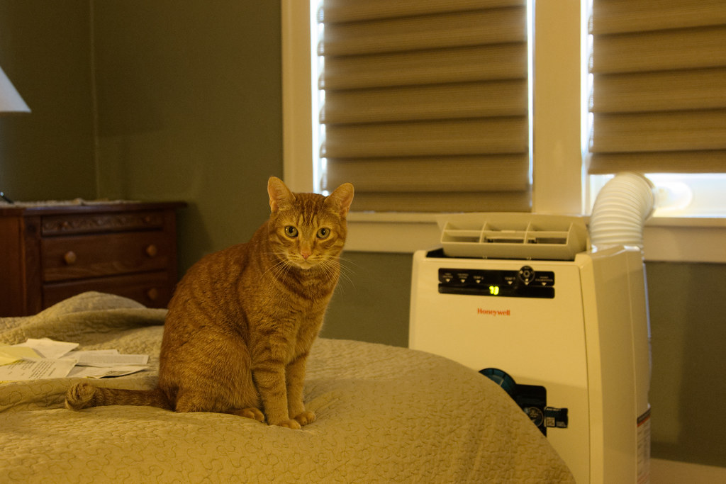 Our orange tabby Sam enjoys the new air conditioner